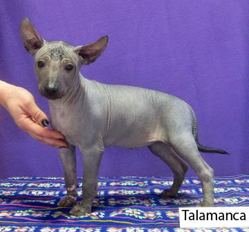 talamanca122216-72