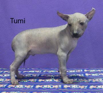 tumi122216-72