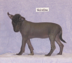 valentina0500918.72